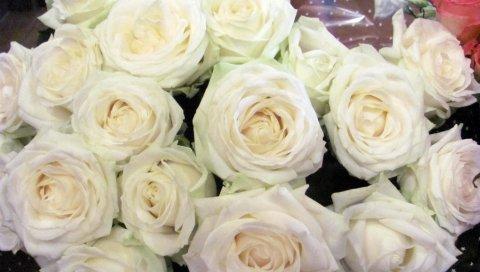 Розы, цветы, белый, цветок, упаковка