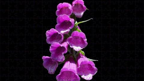 Наперс, цветы, черный фон, головоломка