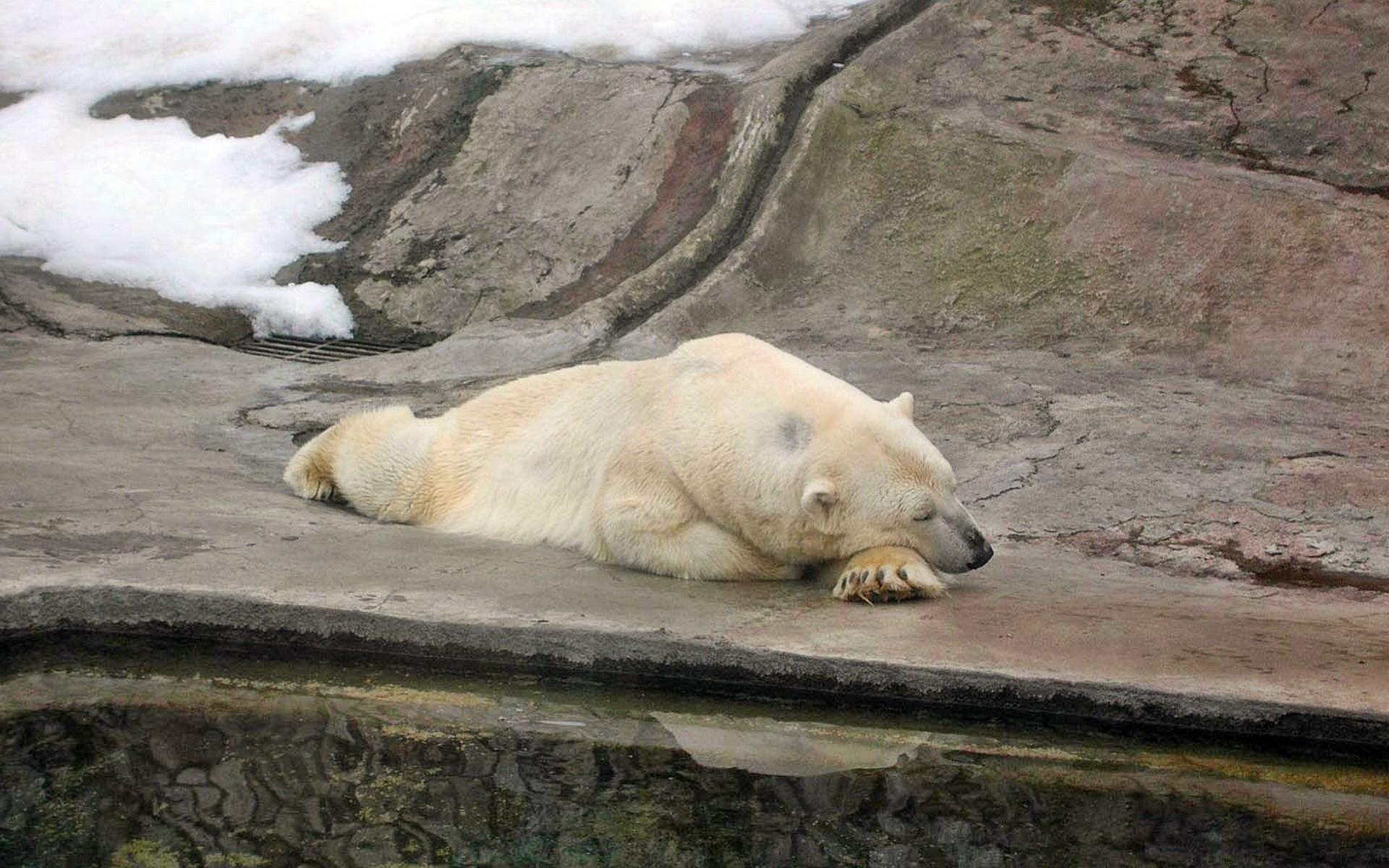 смешные картинки с медведями которые спят такие элементы