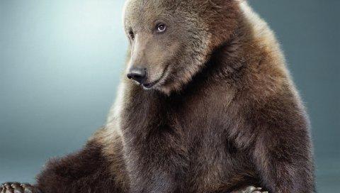 Медведь, черный, милый, мех