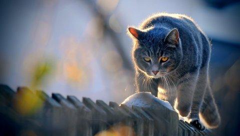 Кошка, забор, прогулка, взгляд, солнечный свет