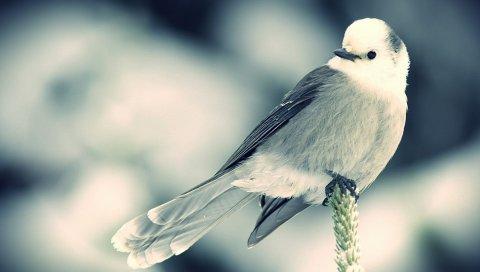 Птица, ветка, сидеть, черный белый