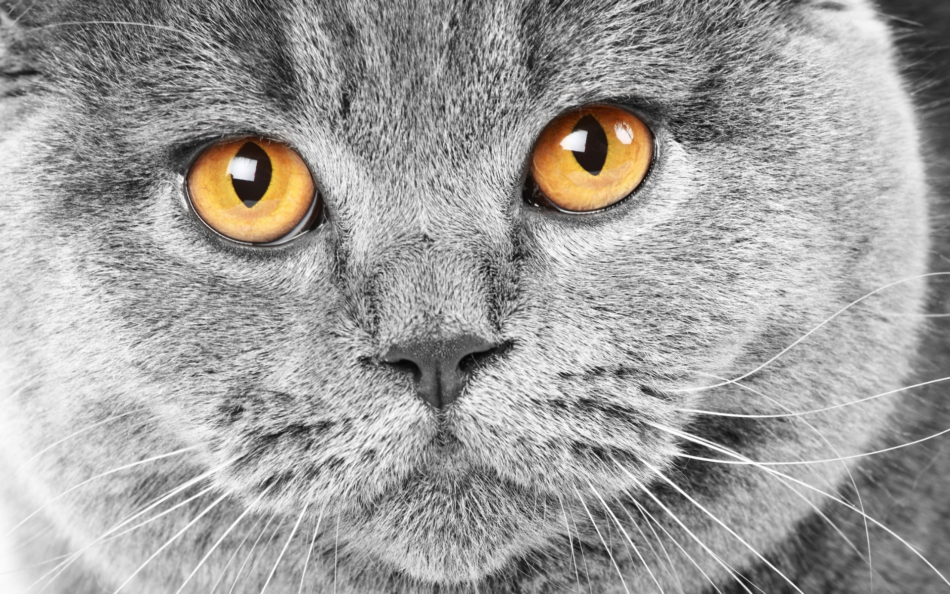 Картинки Кошка, морда, ожидание, глаза, печаль фото и обои на рабочий стол