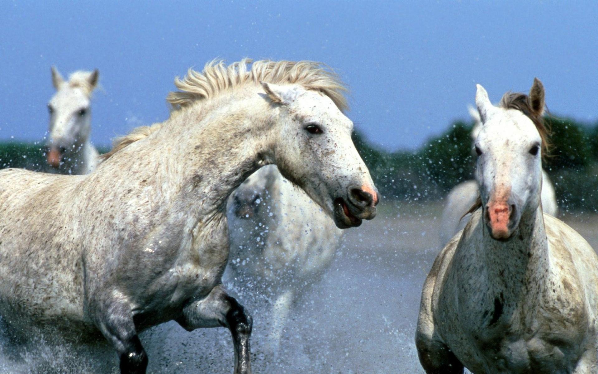 Картинки Лошадь, брызги, вода, прогулки, фото и обои на рабочий стол