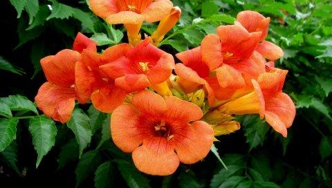 Цветы, яркие, оранжевые, ветки, листья, травы