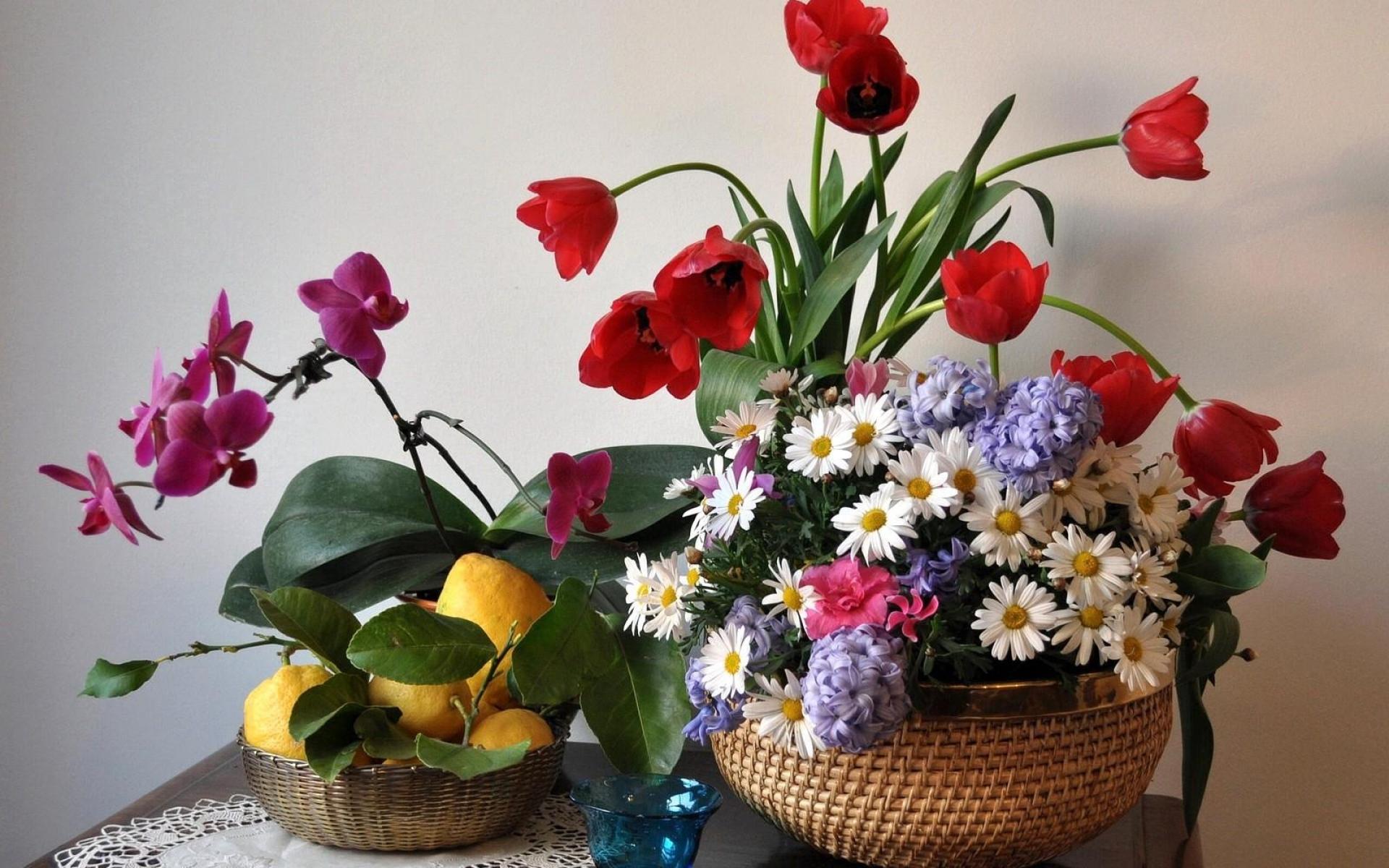 фотоснимках, сделанных фото цветов тюльпанов и ромашек постоянно сталкивалась