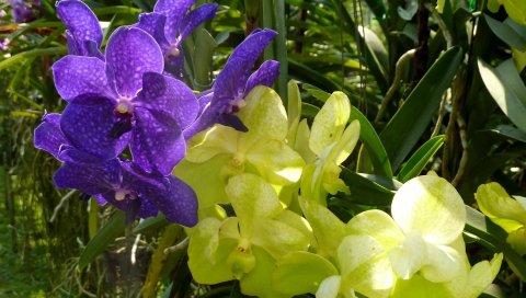 Орхидеи, цветы, сад, различные, зелень, солнечный