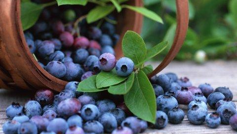 Черника, ягода, урожай, корзина, листья
