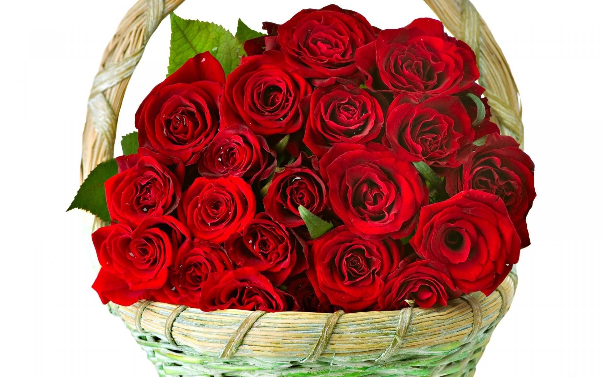 Картинки Розы, цветы, куча, корзина, ловко фото и обои на рабочий стол