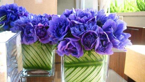 Цветы, синие цветы, травы, регистрация