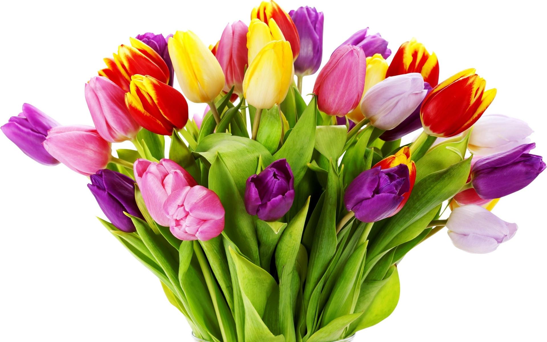 Картинки Тюльпаны, цветы, букет, яркие, ваза, белый фон фото и обои на рабочий стол