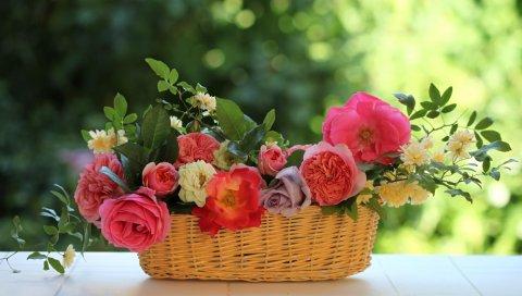 Розы, цветы, сад, магазины,