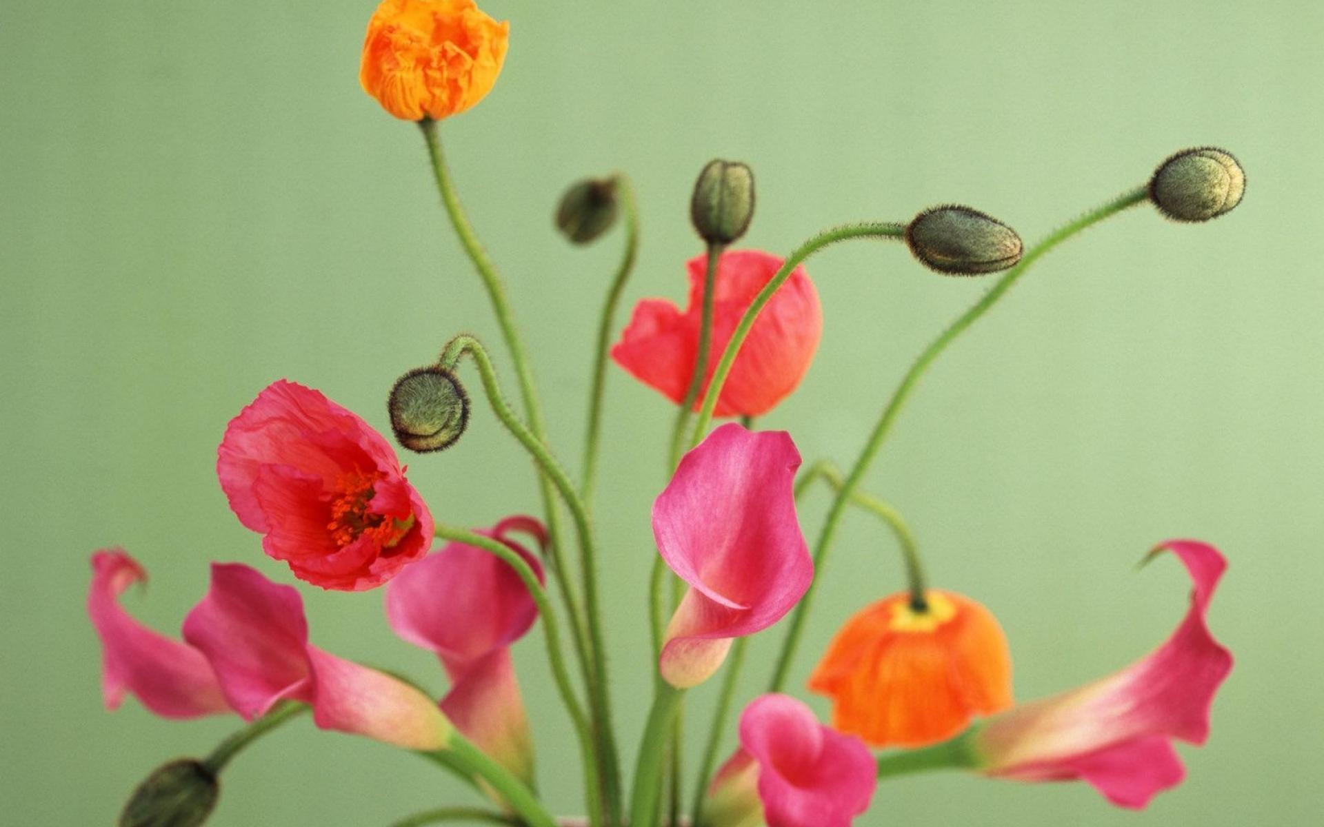Картинки Маки, цветы, букет, ваза фото и обои на рабочий стол