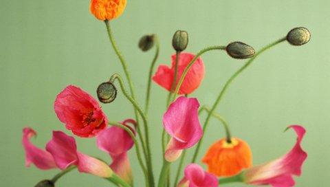 Маки, цветы, букет, ваза