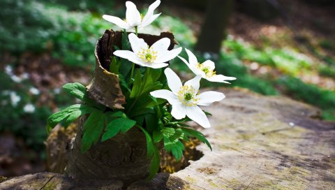 Цветы, лес, пень, зелень