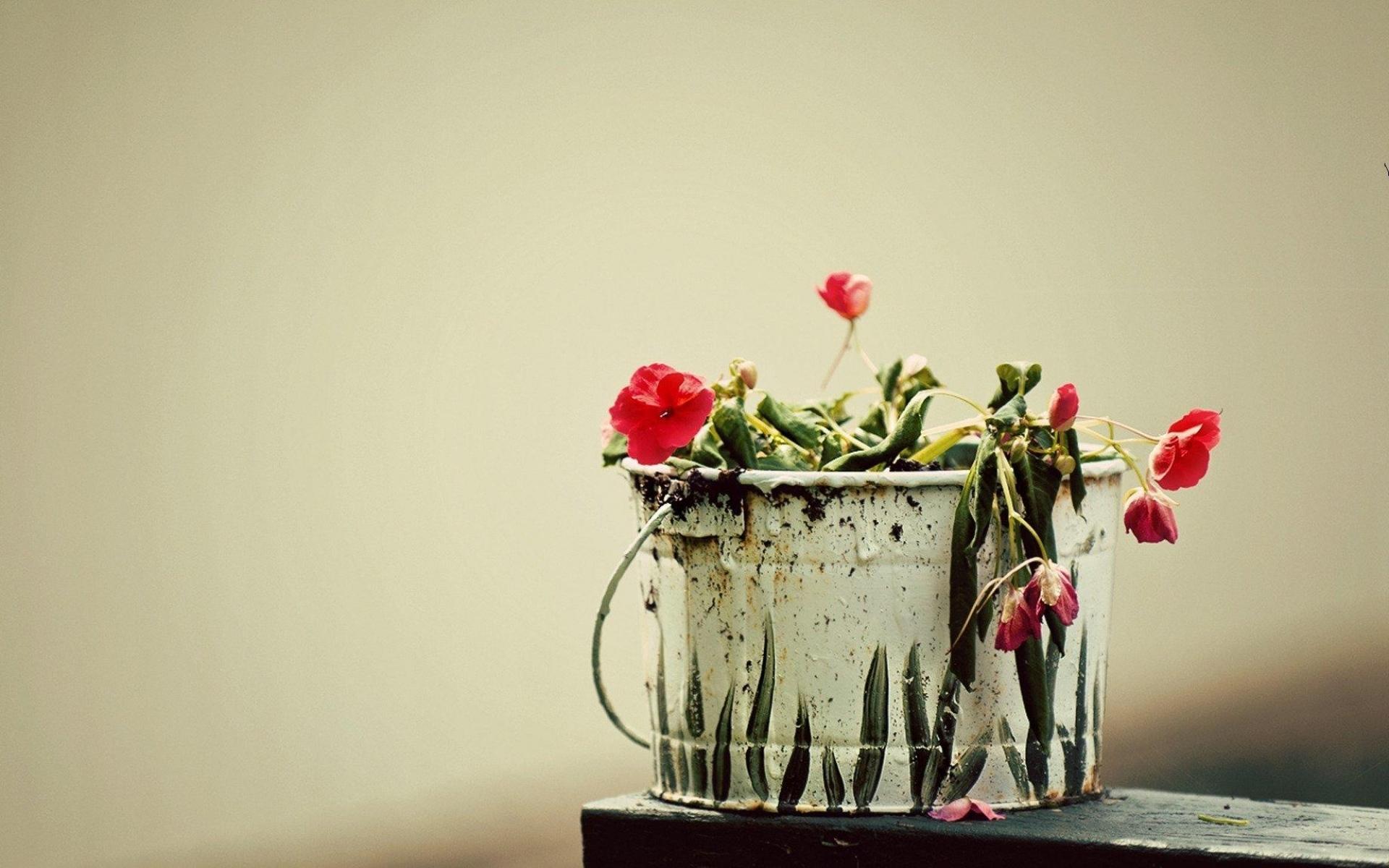 Картинки Цветы, свисающие, ведро фото и обои на рабочий стол