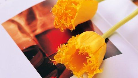 Тюльпаны, цветы, желтый, пара, книга, поворот