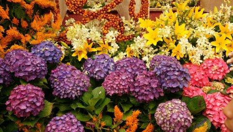 Гортензия, лилии, цветы, зелень, разнообразие