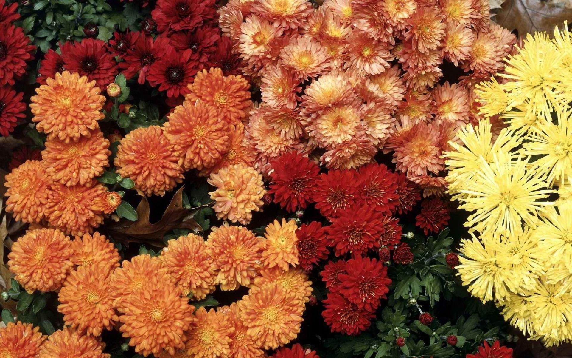 сытные картинка цветов дубки одном