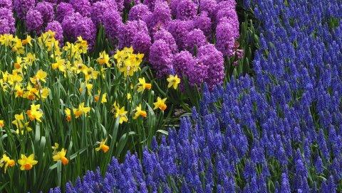 Нарциссы, мускари, гиацинты, весна, кровать