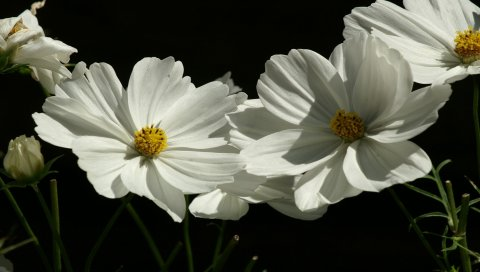 Цветы, белый, зеленый, фон, крупный план