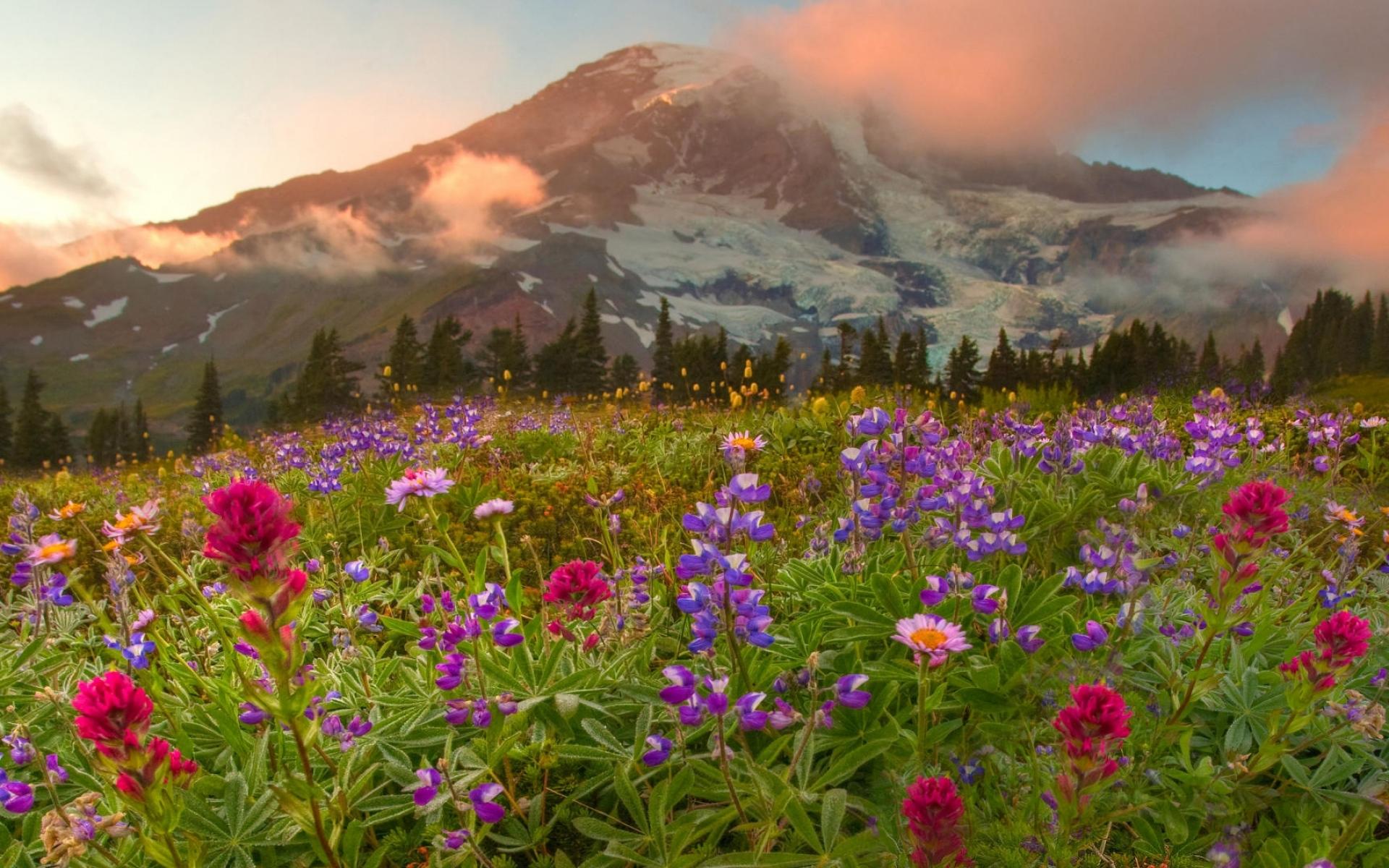 поляна цветы трава холмы горы glade flowers grass hills mountains  № 1829242 бесплатно