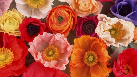 Цветы, течет, бутоны, яркие, красочные