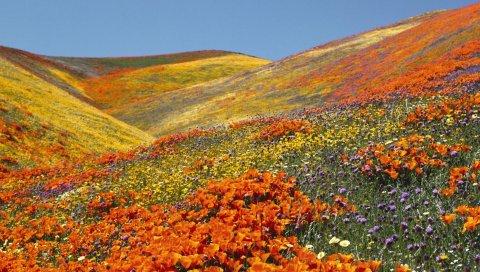 Цветы, склон, долина, овраг, красота, природа