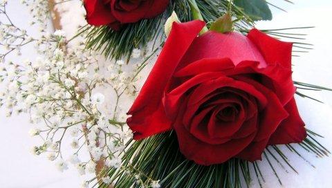 Розы, цветы, пара, гипсофила, иголки, снег, зима