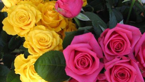 Розы, цветы, бутоны, розовые, желтые