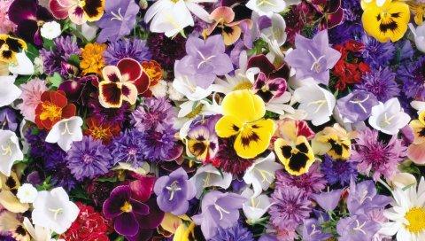 Анютины глазки, васильки, колокольчики, цветы, ассорти