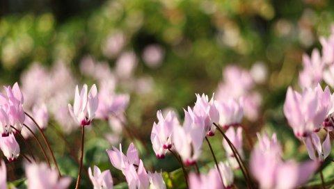 Цветы, луг, макро, трава
