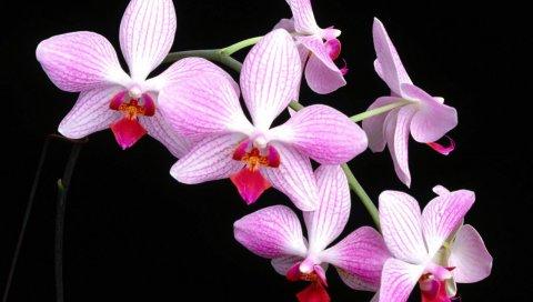 Орхидея, цветок, ветка, фон, контраст