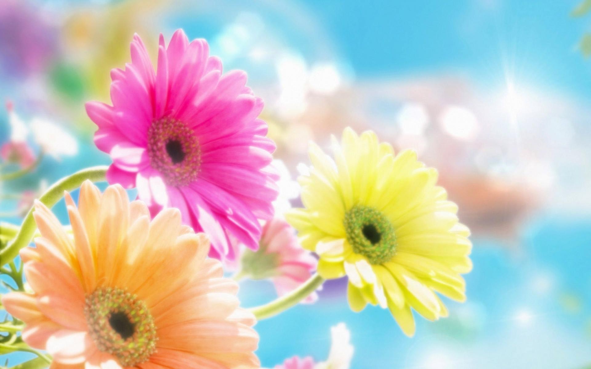 Картинки Гербера, цветы, блики, солнце, резкость фото и обои на рабочий стол