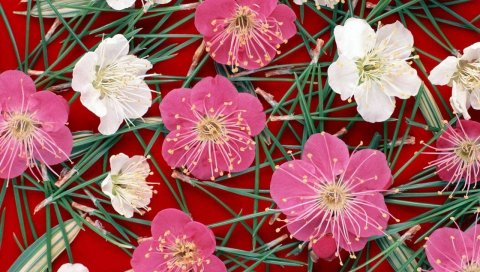 Цветы, иглы, узор, тычинки