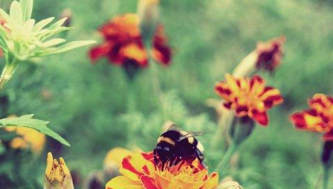 Цветы, пчелы, полосатые, очищающие