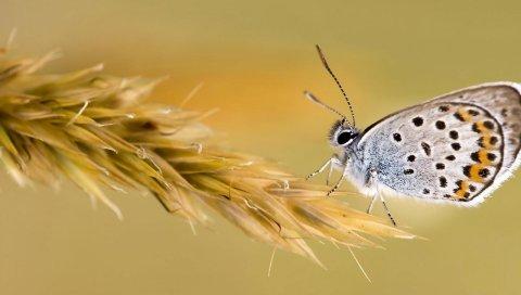 Бабочка, крылья, трава, цвет