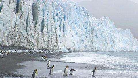 Королевские пингвины, побережье, океан, лед