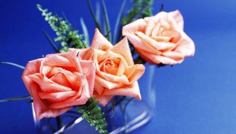 Розы, три, состав, капля, свежесть, фон