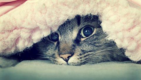 Кошка, лицо, глаза, взгляд
