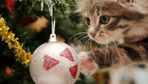 Котенок, рождественский бал, игра, лицо, пушистый