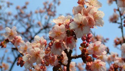 Цветение, ветка, весна, настроение