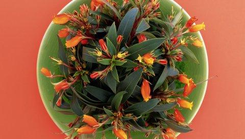 Цветы, тарелка, зелень, композиция
