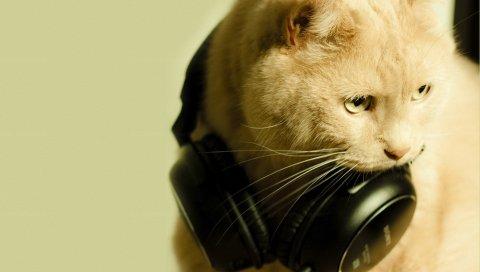 Кошка, лицо, наушники, фанки