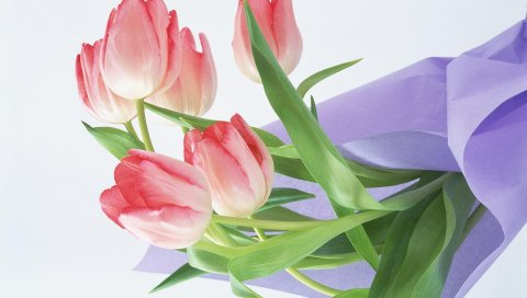 Тюльпаны, цветы, букет, обертывание