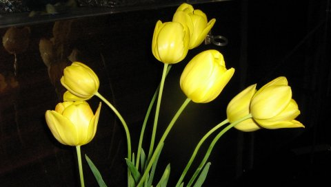 Тюльпаны, цветы, желтый, цветок, блики