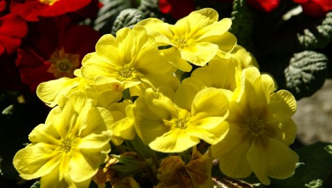 Цветы, желтый, яркий, солнечный