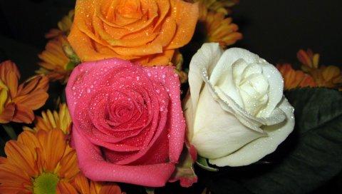 Розы, герберы, цветы, букет, капля, свежесть