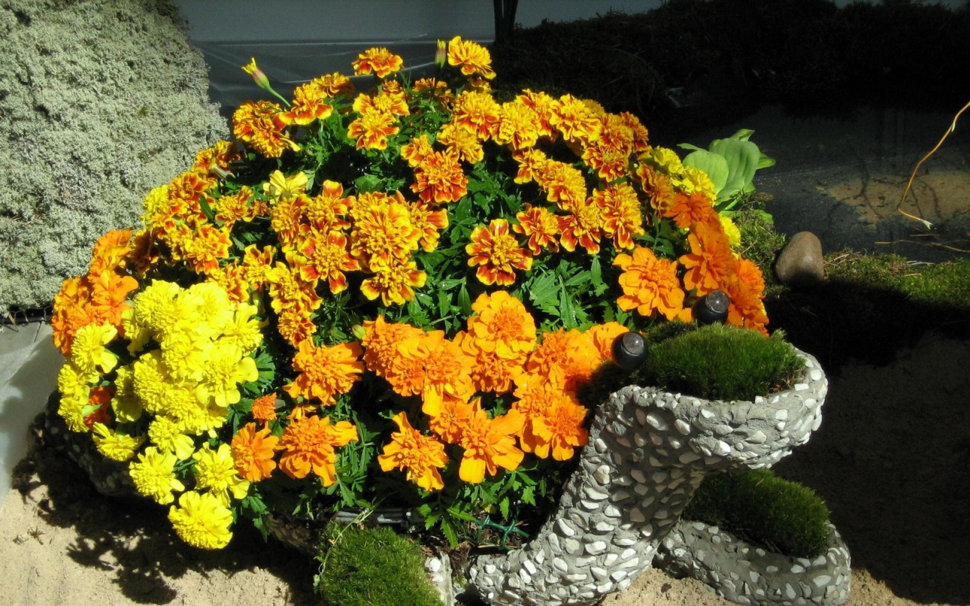 Прямоугольные клумбы с цветами фото гэс