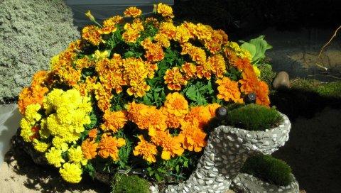 Бархат, цветы, клумба, черепаха, песок